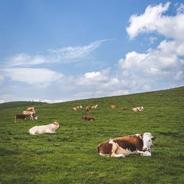 Amkor på grönbete - Irländskt nötkött