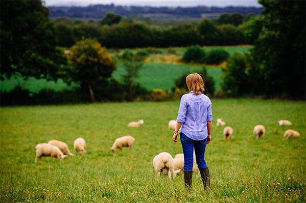 Meet the Sheep Farmer